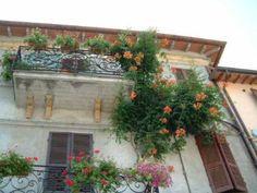 flowers-in-balcony