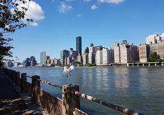 Ne passez pas à côté de Roosevelt Island. Cette île est un havre de paix et offre une vue incroyable sur Manhattan, en bordure de l'East River.