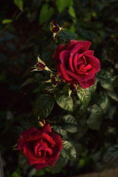 Flowers World. 花卉世界. - Comunidade - Google+