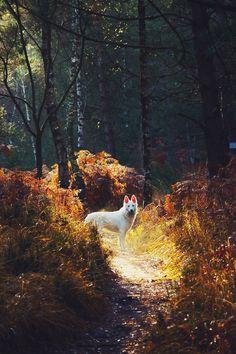 Forest Star | bengrim http://500px.com/photo/64123553/forest-star-by-bengrim