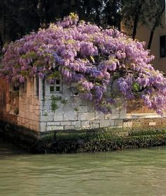 Wisteria and Venice. Mom would have loved it. Most Beautiful Cities, Beautiful World, The Places Youll Go, Places To Visit, Vides, Places In Italy, Regions Of Italy, Murano, Visit Italy