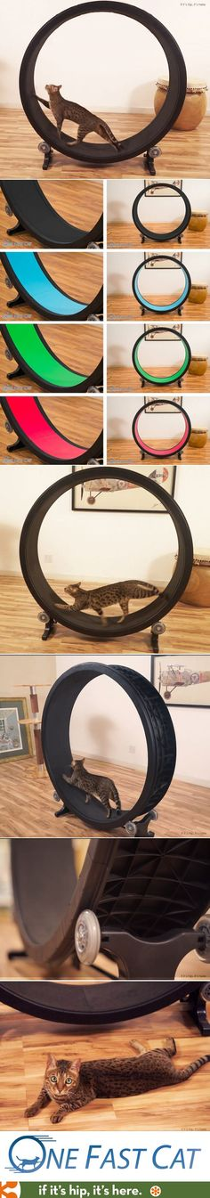An exercise wheel for Cats What a wonderful idea... my cat(s) would probably just sleep on it!