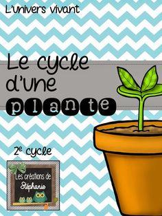 Les créations de Stéphanie: { Projet de sciences } Le cycle d'une plante - Extrait gratuit! (2e cycle)