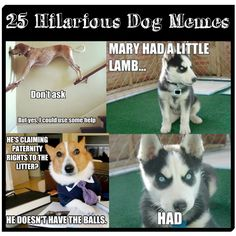 25+of+the+Most+Hilarious+Dog+Memes+on+the+Interwebs