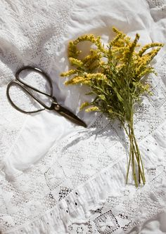 Goldenrod ~ Laura Sellers Photography - This is the kind of tea that the grandmother drank in Seedfolks.