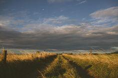 Fotobehang: Graslandschap