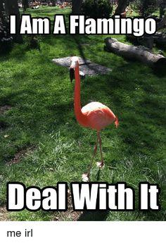 Image result for flamingo trashcan