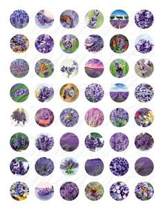 Lavender 1 inch round Digital Collage Sheet bottle by images4you