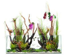 weißer hintergrund und modernes aquarium