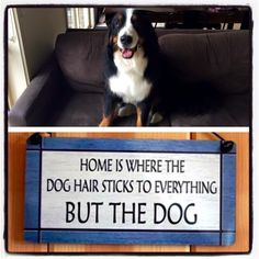 This is for my dog
