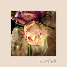 One Rose, Display, Nature, Flowers, Pictures, Photography, Painting, Art, Photos