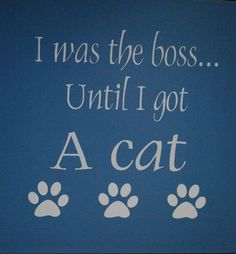 lol...Two cats are a tag team of meows, claws and jumping out of no where!