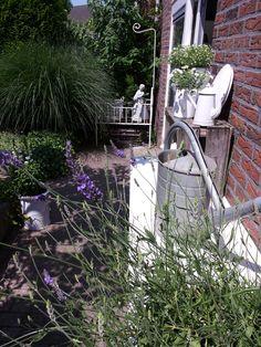 Brocanteneo - my garden.