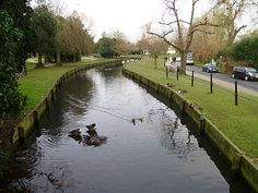 The New River, Enfield park looking north. (Enfield Town - Wikipedia)