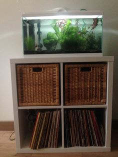 Expedit As Fish Tank Stand Google Search Condo Fish