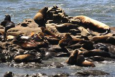 Coos Bay is surrounded by the Pacific shoreline with its beautiful dunes and lovely beaches, plan your vacation today! Shell Island, Oregon Beaches, Coos Bay, Travel Destinations Beach, Beach Town, Travel Guide, Vacation, Animals, Vacations