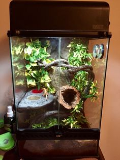 """rx online """"Gecko"""" in his enclosure on the first day I got him. """"Gecko"""" in his enclosure on the first day I got him. Terrariums Gecko, Bartagamen Terrarium, Tree Frog Terrarium, Terrarium Reptile, Crested Gecko Vivarium, Crested Gecko Habitat, Crested Gecko Care, Leopard Gecko Habitat, Reptile Habitat"""