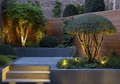 Love the lighting highlighting the beautiful forms. John Davies Garden Design