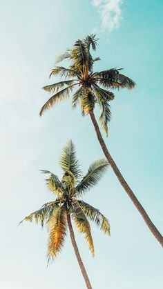Palm Tree iPhone Wallpaper Collection by www. You are in the right place about Beach Vacation with kids Here we offer you the most beautiful pictures about the couples Beach Vacation y