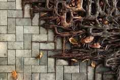 Tree roots are vast and intricate systems. These photos prove tree roots can put up a good fight against concrete. Abandoned Buildings, Abandoned Places, Man Vs Nature, 10 Tree, Photo Images, Mood Images, Tree Roots, Growing Tree, Flowering Trees