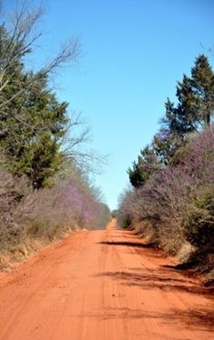 Oklahoma Red Dirt Road & Red Bud Trees.  Some would find this a good thing not to have to deal with, but everything has it's own beauty.