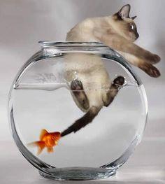 kitten in fish bowl...