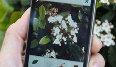 Se sei semplicemente curioso o anche un appassionato non ti possono mancare le migliori app che riconoscono piante e fiori in automatico scattando una foto.