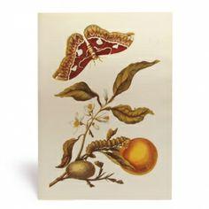 Botanische prent met een rups, cocon en vlinder #prent #botanical #natuur