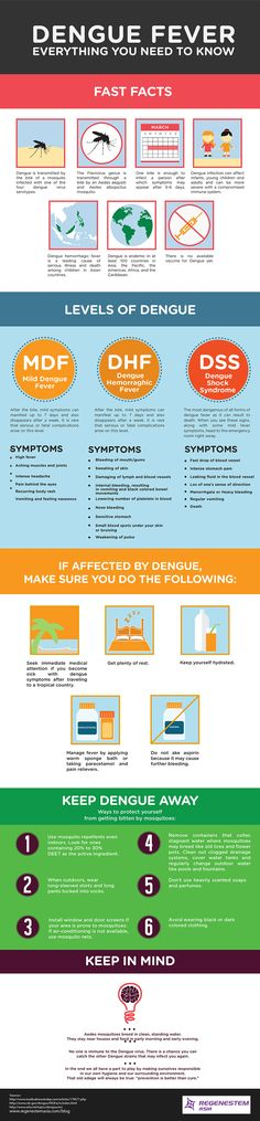 Dengue Fever: Everything You Need to Know [Infographic]