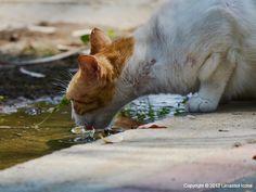 Thirsty Cat - Limassol, Cyprus
