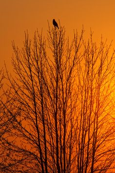 Orange Sunset by Renald Bourque