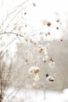 Wedding Ideas: winter-snow-tree