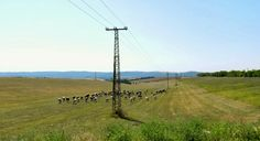 Torvaj, Somogy @Marti van Os Wind Turbine, Utility Pole, Van, Vans, Vans Outfit