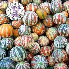 Rare Kajari Melon, fruit - 15 seeds - UK SELLER