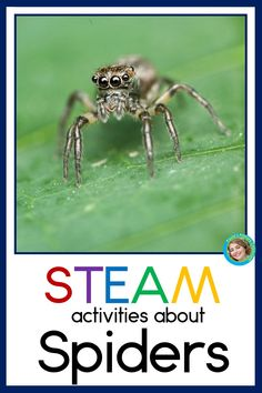 What's creepier for Halloween science than spiders?  Your preschool, kindergarten and first grade students will be fascinated by all the hands on activities included in this spider unit!  They'll sing about the parts of a spider and make a hat (complete with spinnerets and fangs), use craft materials to build their own spiders, read about the spider life cycle, measure  with spiders and even graph how they feel about them. Spiders STEAM is a fun way to bring STEAM learning into your… Steam Activities, Hands On Activities, Science Activities, Parts Of A Spider, Halloween Science, Happy Halloween, Steam Learning, Spider Crafts, Math Concepts