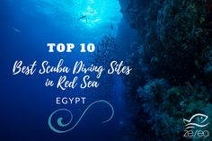 The 10 Best Scuba Diving Sites in Red Sea Egypt ! #scuba #diving #redsea #scubadiving #underwater #uwphoto