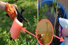 Almaecettel permetezi be a kertjében lévő növényeket… Zseniálisa Ötlet! - Tudasfaja.com