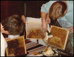 Bee Keeping info. for beginners- this would be a good hobby.  honeybees are great!