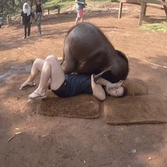 GIF Well, play with me elephant GIF Nun, spiel mit mir Elefant Baby Elephant Video, Photo Elephant, Elephant Gif, Elephant Love, Baby Elephant Pictures, Elephant Facts, Elephants Photos, Indian Elephant, Cute Funny Animals