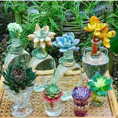I had promised myself no more water propagation till the weather warmed up but. Propagating Succulents, Succulent Gardening, Hydroponic Gardening, Cacti And Succulents, Hydroponics, Planting Succulents, Cactus Plants, Container Gardening, Echeveria