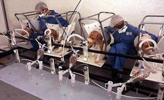 No animal should have to suffer when we have all the tools to do better. To help draw attention to the plight of beagles in labs, Beagle Freedom Project shared this telling image on Facebook.