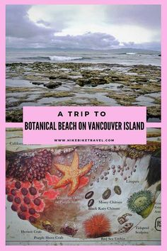 A Day Trip to Botanical Beach near Port Renfrew BC Hike Bike Travel Vancouver Island, Tonga, Bora Bora, Honey Moon, Best Island Vacation, Fiji Travel, Beach Photography, Levitation Photography, Exposure Photography