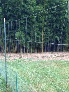 Low cost Fishing line deer fence.  Using 10 ft wood corner posts, 8ft metal posts in between with chicken wire on the bottom to keep out rabbits and high tensile wire and woven fishing line around the rest of it! Much cheaper than the deer fencing systems sold online (around $700). You could do this for around $100-150 with all the fence posts and chicken wire. Fishing line is virtually free!