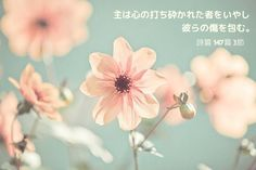 Psalm 147:3(InJapanese:〈†(旧約)聖書〉詩篇147:3 主は心の打ち砕かれた者をいやし彼らの傷を包む。)