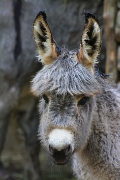 Miniature donkey foal by DarkTara.