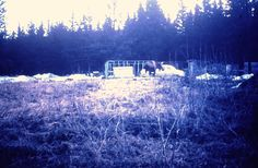 MOOSE, HOMER, Territory of Alaska 1953/54 by Myrtis Wright
