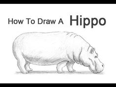 How to Draw a Hippopotamus - YouTube