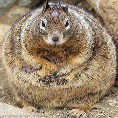 """ I iz not a glutton. If der ever be a famine, I kin live off meh fat."""