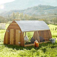 Tablero donde se enseña a criar pollos en forma organica...