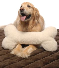 Every dogs dream: bones...even better when they're life-size and made to cuddle on!